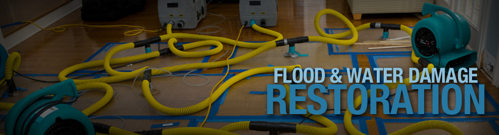 lotus water damage cleaning services Essendon North